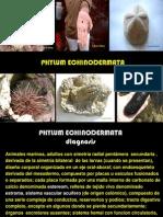 Equinodermos A