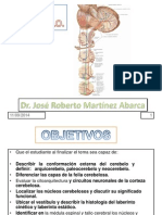 c11-cerebelo