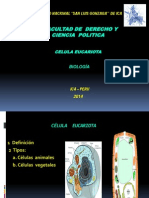 Derecho - Célula Eucariota 2