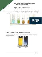 Bio Lab Report 2 | Biomolecules | Carbohydrates