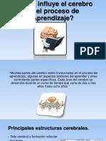 Cómo Influye El Cerebro El Proceso De