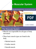 Chapter 6 - Muscular System