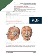 1517090328.Músculos de la Cara (1) (1)