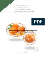 Informe 1 de Plagas Mandarina