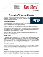 Preserving Flowers and Leaves