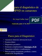 2. Métodos Para El Diagnóstico de EMS-AHPND J. Cuéllar-Anjel