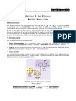 Bio! Acidos Nucleicos