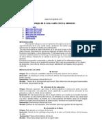 miologia-cara-torax.doc