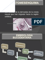 odontogenesisluis-110619121120-phpapp01