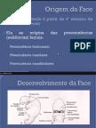 Desenvolvimento Da Face Odonto 2014 2