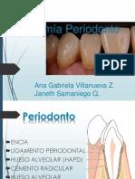 Anatomía Periodonto Final
