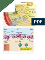 enzyme avtivity