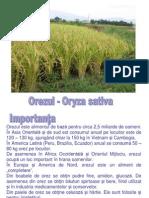 Tehnologia de cultura pentru orez
