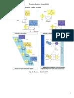 Bazele Moleculare Ale Ereditatii