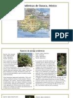 endemicos1.pdf