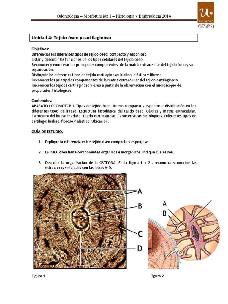 Morfo I Histología Guía 4 2014