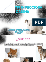 Hepatitis Infecciosa Canina