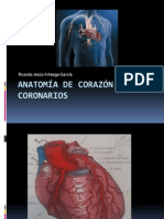 CARDIO Anatomía de Corazón