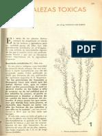 Botanica Malezas BSE Mio-mio, Senecio, Chilca