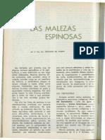 BSE -Malezas Espinosas Lombardo Botanica