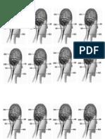 1 - Sistema Nervoso - Imagem