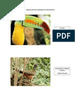 Especies De Aves en LatinoAmérica.docx