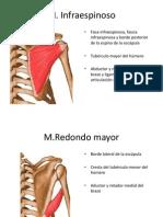 Musculos de la cintura escapular.pptx