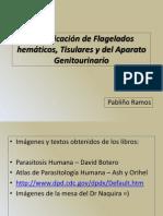Identificación de Flagelados Hemáticos, Tisulares y Del