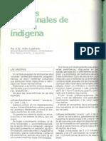 Plantas Medicinales de La Flora Indigenas Atilo Lombardo Botanica Arueras Talas