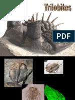 23 Trilobites