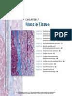 histo muscle tissue