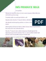 How Cows Produce Milk-hp