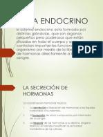 Sistema Endocrino Grupo #1