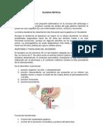 ULCERA PEPTICA presentacion.docx