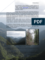 Floresta Da Madeira