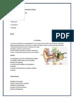 RIESGOS PROVOCADOS POR AGENTES FÍSICOS.docx