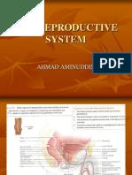 presentasi sistem reproduksi