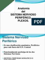 6-Anatomia Sistema Nervioso Periferico