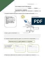 Guía de Trabajo 1 Fotosíntesis