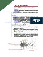 Resumão de Neuroanatomia