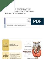 La Hormona Tiroidea y Su Relacion Con El Movimiento Dental