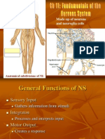A_P+Chapter+11+Neural+tissue
