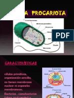 SEM 08 -Celula Procariota