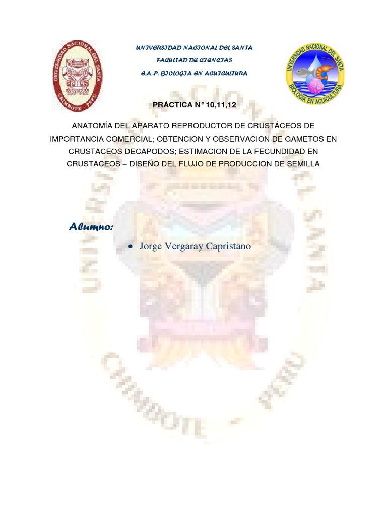 Anatomía Del Aparato Reproductor de Crustáceos de Importancia ...