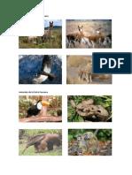 Animales de La Sierra Peruana