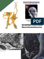 3.sinapsesilvia
