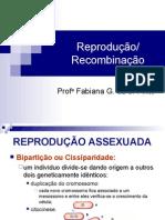 AulaReproduão2012.ppt
