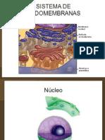 Sistema de Endomembrana y Sintesis de Proteinas