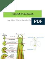 TEJIDOS VEGETALES2014 (1)