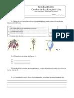 2. Diversidade Das Plantas - Teste Diagnóstico (1)